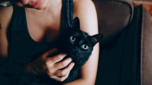 かわいい黒猫の画像